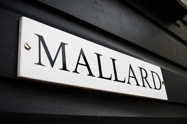 MALLARD image